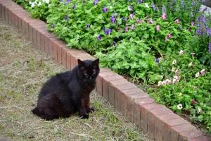 黒猫 @日比谷公園