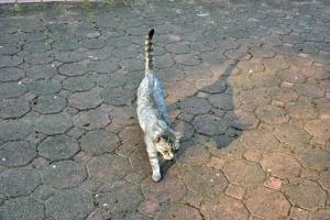灰色猫 @日比谷公園
