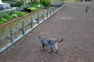 灰色猫と黒猫 @日比谷公園
