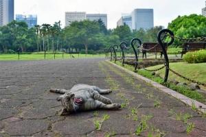 灰色猫 @日比谷公園 あくび