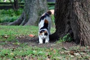 のびー おはよー猫 @日比谷公園