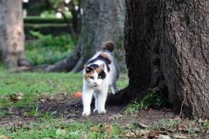 おはよう猫 @日比谷公園