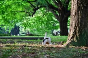 夏のイチョウの木と猫 @日比谷公園