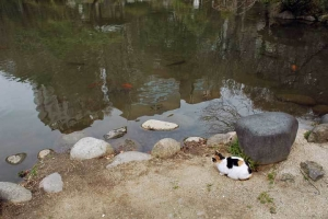 日比谷公園雲形池と三毛猫さくら