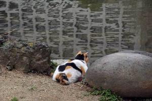 日比谷公園雲形池に映るビルの窓と三毛猫さくら