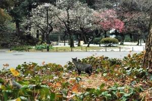 白梅、紅梅、残雪、猫@日比谷公園