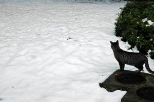 残雪と猫のシルエット@日比谷公園