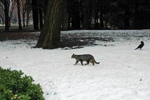 雪の上の猫とカラス@日比谷公園