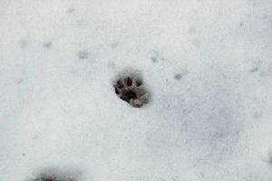 雪の上の猫の足跡@日比谷公園