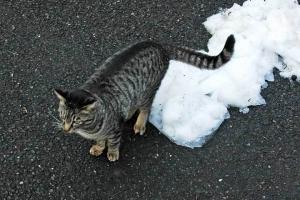 残雪と猫@日比谷公園