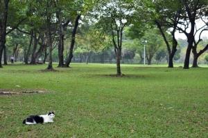 広いスペース、バンコク・ルンピニ公園の猫 Lumpini park cat