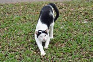 バンコク・ルンピニ公園の猫 Lumpini park cat