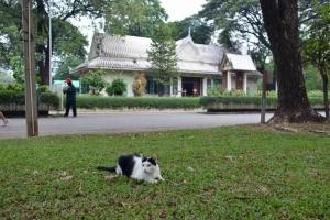 バンコク・ルンピニ公園の建物と猫 Lumpini park cat