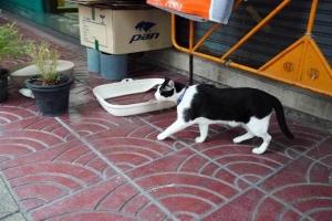 Cat, Thanon Yaowa Phanit