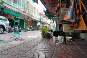 shoe shp cat, Thanon Yaowa Phanit