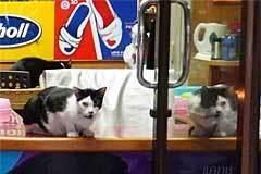 shoe shp cat
