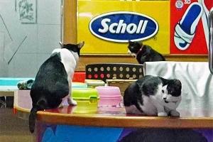 shoe shp cats
