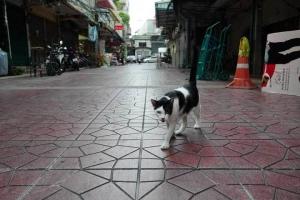 Shoe shop cat, Yaowa Phanit, Bangkok