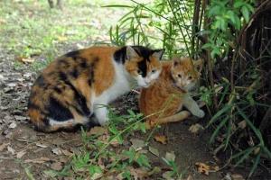 野良の母子猫(三毛猫の母と茶トラ白の子)