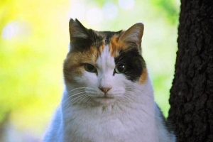 秋色背景日比谷公園の三毛猫さくら