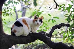 木登り猫 日比谷公園の三毛猫さくら