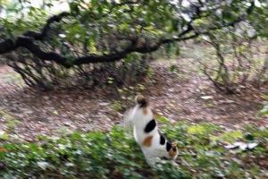 木から飛び下りた日比谷公園の三毛猫さくら