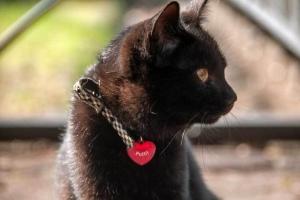 日比谷公園の捨て猫(黒)
