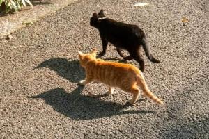 日比谷公園の捨て猫きょうだい(茶トラとクロ)