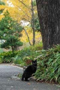 日比谷公園の捨て猫クロ