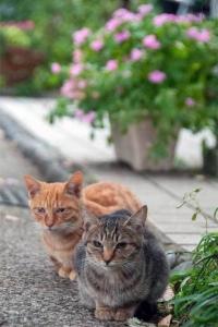 日比谷公園の捨て猫きょうだい(キジトラと茶トラ)