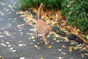 日比谷公園の茶トラ猫(捨て猫)