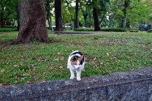 日比谷公園の三毛猫さくら おはよー