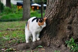 日比谷公園の三毛猫さくら 立ち上がって向きを変える