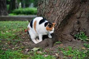 日比谷公園の三毛猫さくら 座る位置を変える