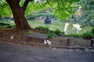 日比谷公園の三毛猫さくら 鶴の噴水