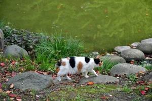 日比谷公園の三毛猫さくら 雲形池