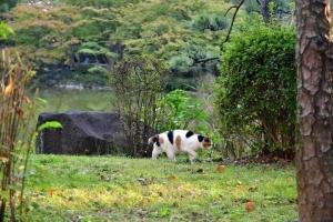 日比谷公園の三毛猫さくら 11月初の雲形池の樹木
