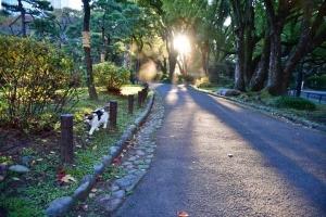 日比谷公園の三毛猫さくらと朝の光