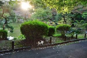日比谷公園の三毛猫さくらと太陽光