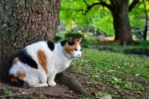 日比谷公園の三毛猫さくらと明るい緑