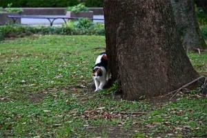 伸びをすを始める日比谷公園の三毛猫さくら