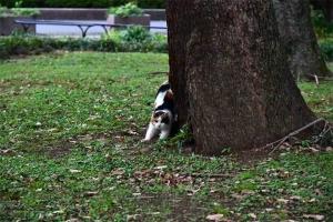 伸びをする日比谷公園の三毛猫さくら (目を開けている)