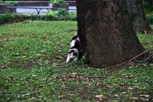 伸びをする日比谷公園の三毛猫さくら (目を閉じている)