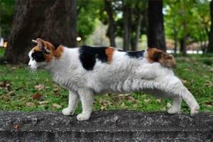 横伸びをする日比谷公園の三毛猫さくら