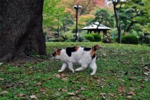 秋の日比谷公園の三毛猫さくら