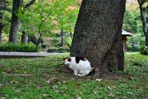 毛づくろいする口の日比谷公園の三毛猫さくら
