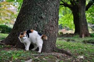 後ろを振り向く日比谷公園の三毛猫さくら