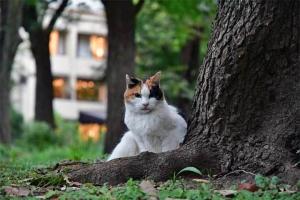 日比谷公園の三毛猫さくらとレストランの明かり