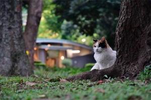 日比谷公園の三毛猫さくらとトイレの明かり