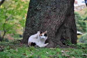 脚を上げて「よっ」と言ってるような日比谷公園の三毛猫さくらと紅葉